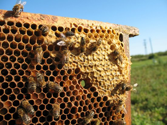 Quince Honey Farm: beehives on moors