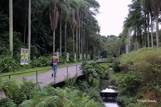 Jardim Botânico de São Paulo : O inicio do passeio.