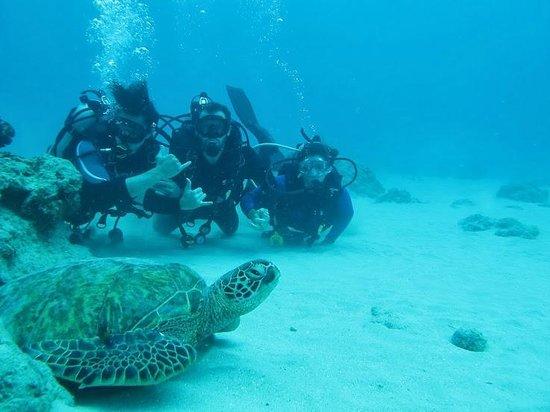 Hawaii Eco Divers & Surf Adventures: Mergulho Inesquecível