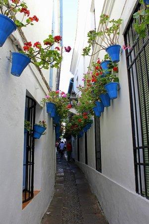 Calleja de las Flores: I fiori