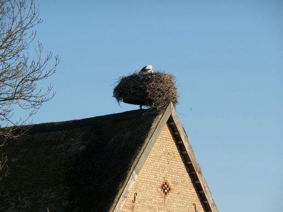 Storchennest bei der Pension & Gasthof Storchennest in Groß Quassow
