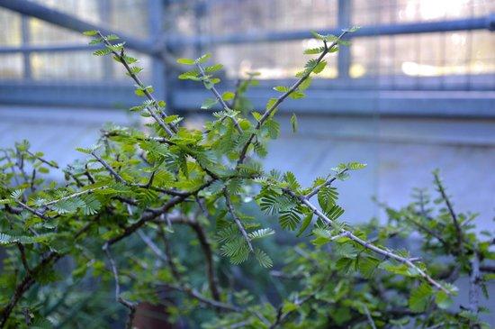 Botanischer Garten der Universität: внутри