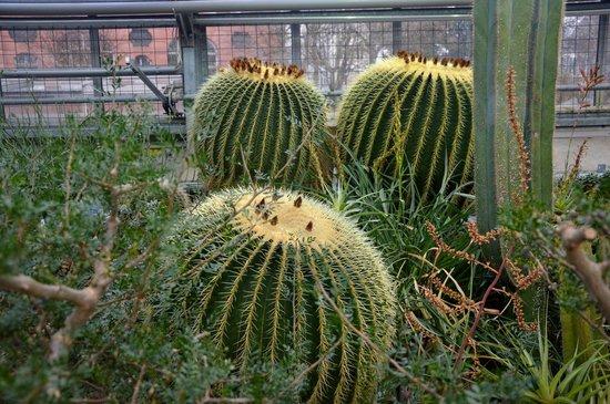 Botanischer Garten der Universität: кактусы