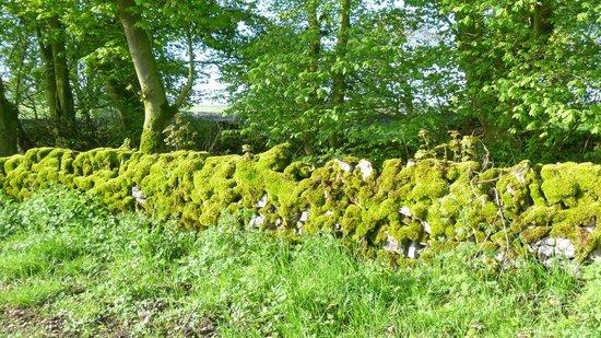 Longshaw Estate: in flower