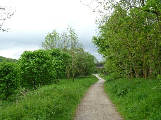 Longshaw Estate: lush green