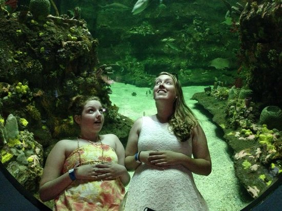 North Carolina Aquarium at Fort Fisher: Laying in the bubble window