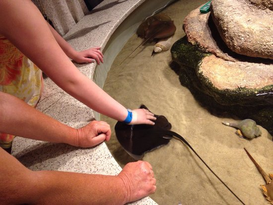 North Carolina Aquarium at Fort Fisher: Touch pool