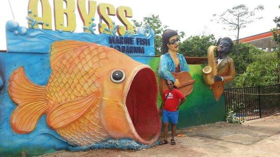 Fish Museum Picture Of Abyss Marine Aquarium Verna Tripadvisor