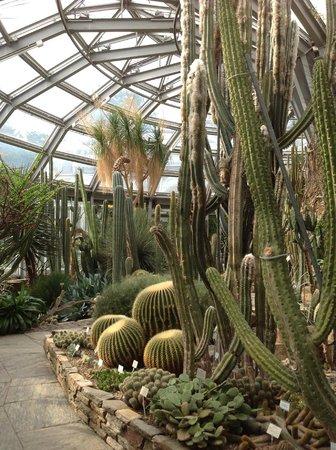 Botanischer Garten und Botanisches Museum Berlin-Dahlem: cactus garden