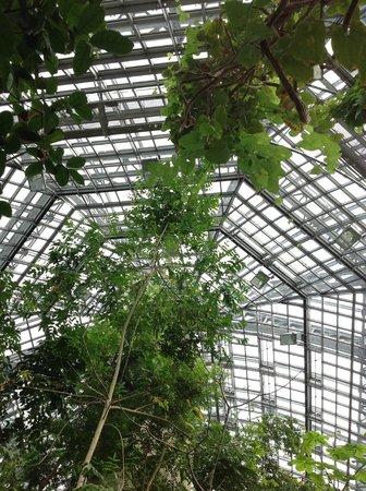 Botanischer Garten und Botanisches Museum Berlin-Dahlem: les serres