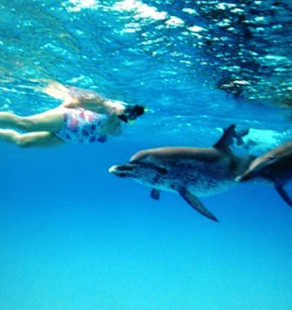 WildQuest : Meeting Dolphin for first time
