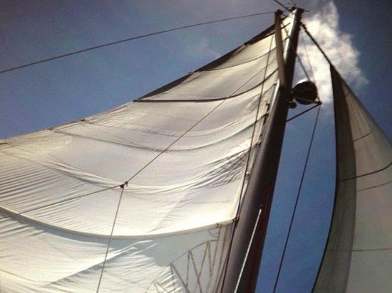 WildQuest: Sailing