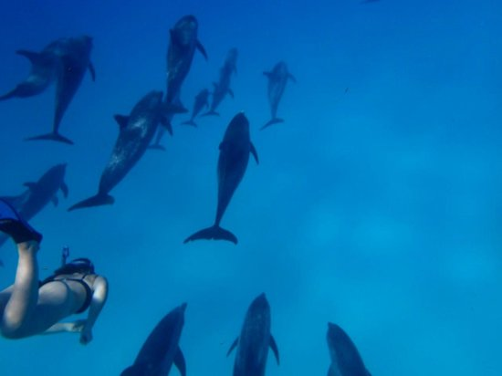WildQuest: Atlantic Spotted Dolphin Pod