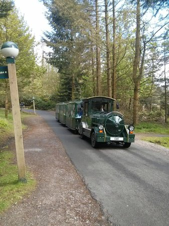 Center Parcs Longleat Forest: train service only avail in Longleat centreparcs