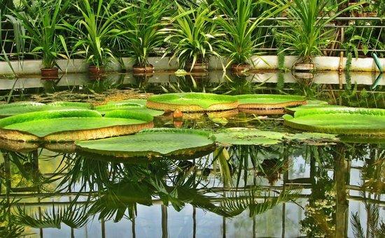 Botanical Garden: Lilies