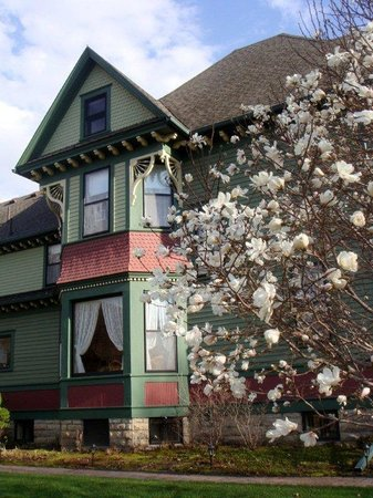 Habberstad House: Star Magnolia sets off our home's exterior