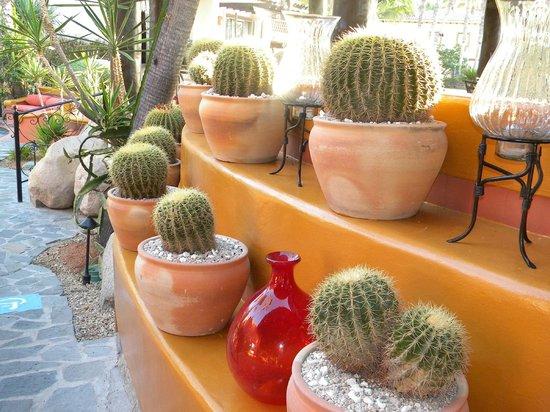 Hacienda del Mar Los Cabos: Beautiful grounds
