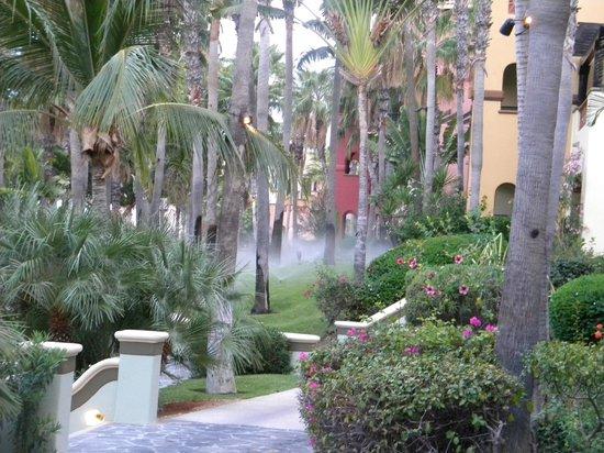 Hacienda del Mar Los Cabos: Garden Areas