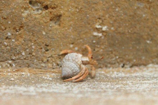 St. James's Club & Villas : crab?
