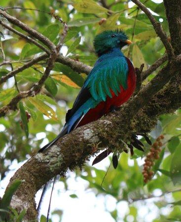 Los Pinos - Cabanas y Jardines: Quetzal !!! :-)