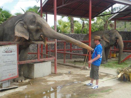 Hutsadin Elephant Foundation : what a trunk lol