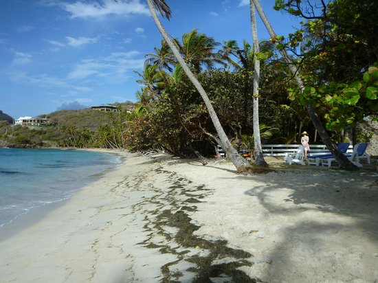 Sugar Reef Bequia : Beach