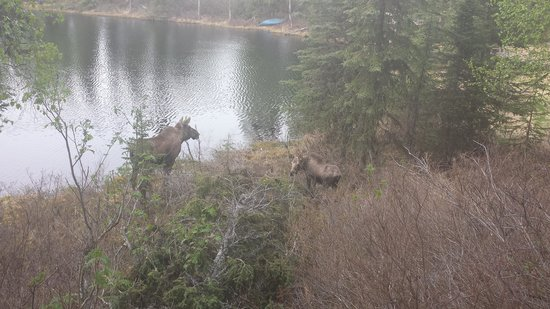Escape For Two : Baby and mama moose