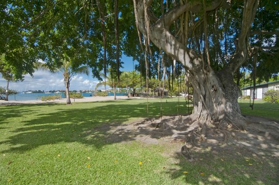 Lance Aux Epines Cottages: Shade tree, beach in background