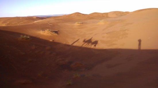Kasbah Azalay Merzouga: camel shadows
