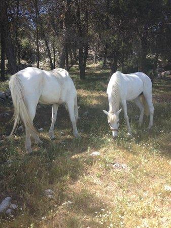 Sierra Pelada Horse Riding School : Luna und Candela