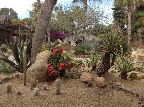 Los Adobes de Todos Santos: Cactus Garden