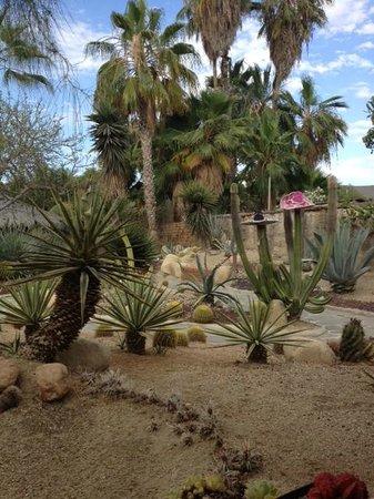 Los Adobes de Todos Santos: And more cactus garden