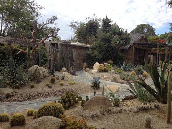 Los Adobes de Todos Santos: Even more cactus garden