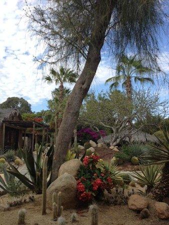 Los Adobes de Todos Santos: More Cactus Garden