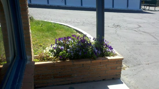 Blue Coast Inn & Suites : End of Tier 2 flowers