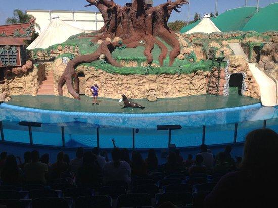Zoomarine Algarve : Seal and sea lion show