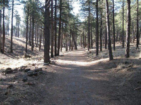 Little America Hotel Flagstaff : Hiking trail