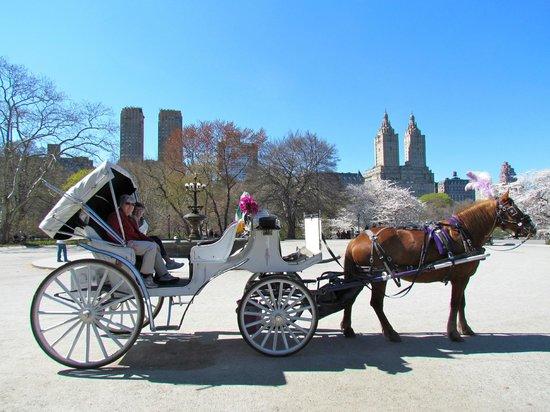 Central Park Horses: Carriage Tour - Central Park