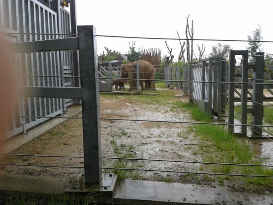Twycross Zoo : See the baby elephant