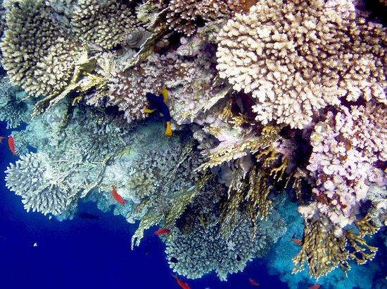 Snorkeling  Blue hole