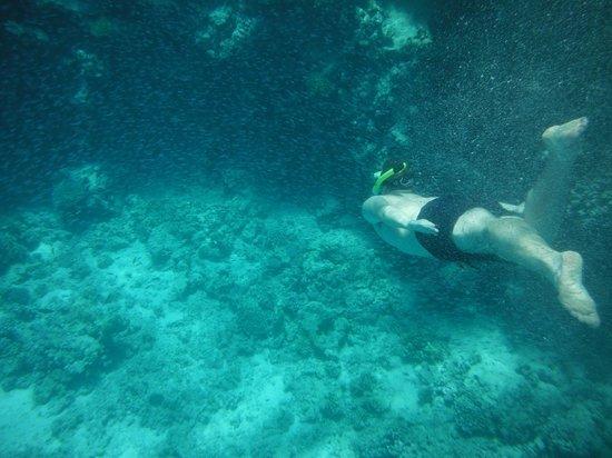 Sinai Safari Adventures : Tiran Island - Snorkeling