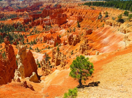 Bryce Canyon Lodge : View 100 yds from Cabin