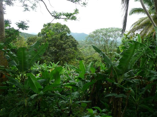Ceiba Country Inn: The Farm