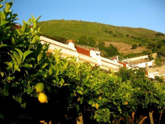 La Rosa Parco Residence : das Hotel vom Zitronenhain aus gesehen