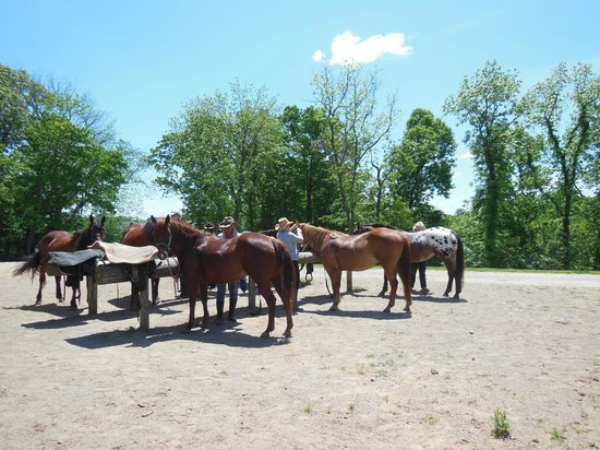 KD Guest Ranch: Getting ready for the trail ride at the hitching post