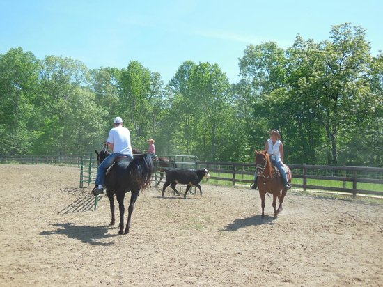 KD Guest Ranch: Team penning