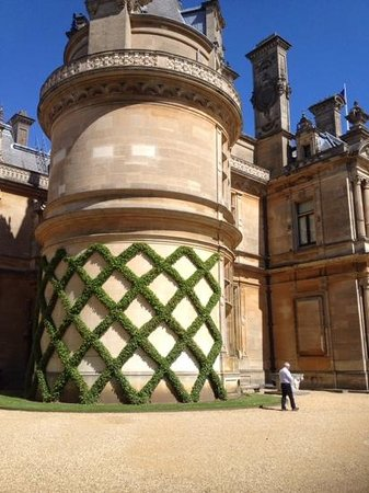 Waddesdon Manor: geometric ivy