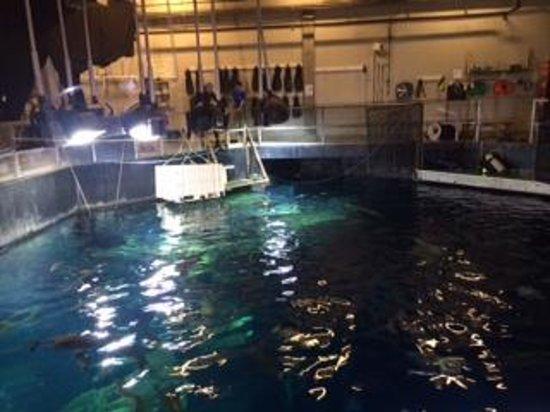South Carolina Aquarium: Great Ocean Tank Behind the Scenes Tour