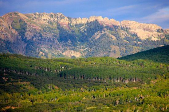 Kebler Pass: A view of the expansive aspen groves looking North & East toward Marcellina Mtn
