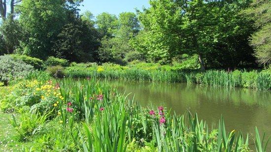 Howick Hall Gardens: Beautiful bog garden